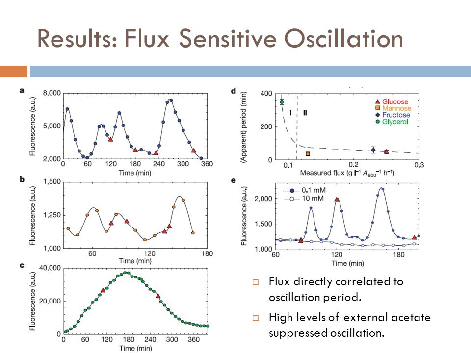 Results: Flux Sensitive Oscillation  Flux directly correlated to oscillation period.