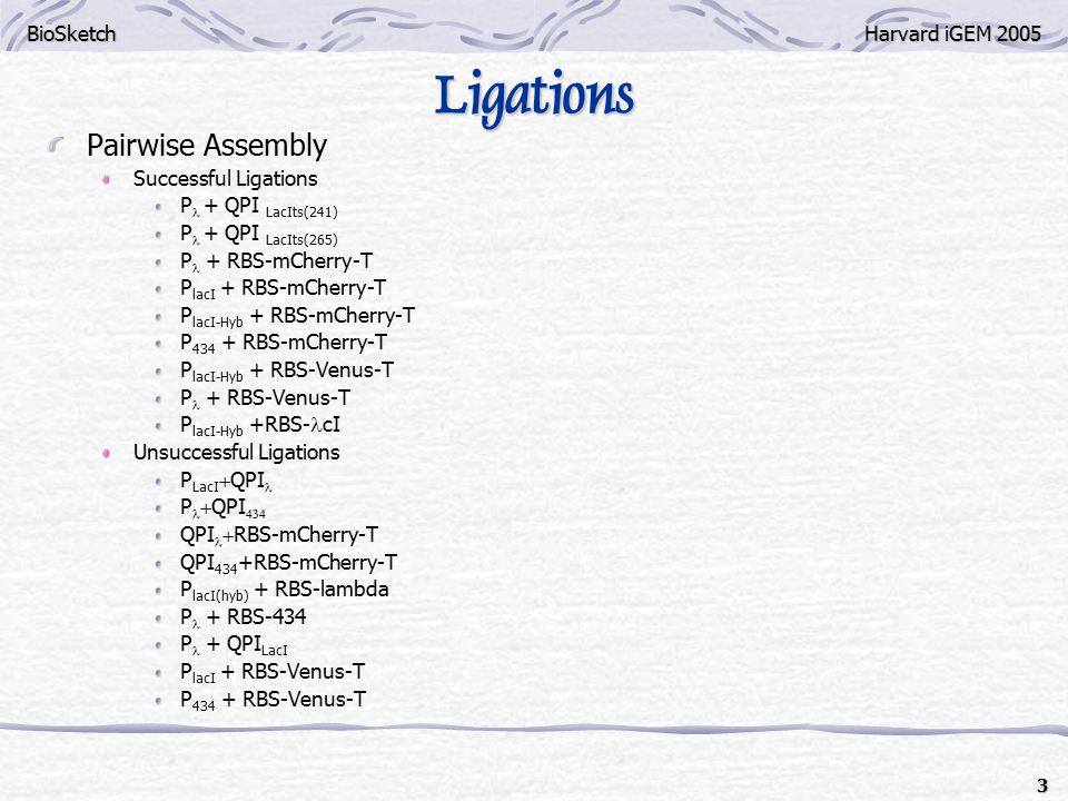 BioSketchHarvard iGEM 2005 3 Ligations Pairwise Assembly Successful Ligations P + QPI LacIts(241) P + QPI LacIts(265) P + RBS-mCherry-T P lacI + RBS-mCherry-T P lacI-Hyb + RBS-mCherry-T P 434 + RBS-mCherry-T P lacI-Hyb + RBS-Venus-T P + RBS-Venus-T P lacI-Hyb +RBS- cI Unsuccessful Ligations P LacI  QPI P  QPI  QPI  RBS-mCherry-T QPI 434 +RBS-mCherry-T P lacI(hyb) + RBS-lambda P + RBS-434 P + QPI LacI P lacI + RBS-Venus-T P 434 + RBS-Venus-T