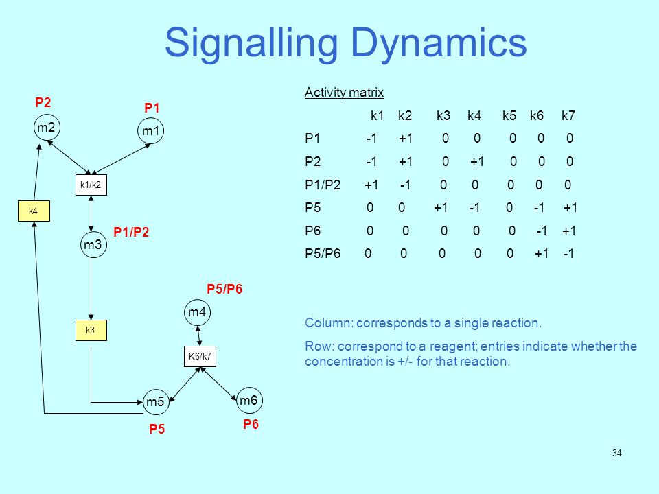 33 Quantitative Analysis - Conclusion Increasing the rate of binding of RKIP to Raf-1* dampens down the k14product and k8product reactions, In other words, it dampens down the ERK pathway.