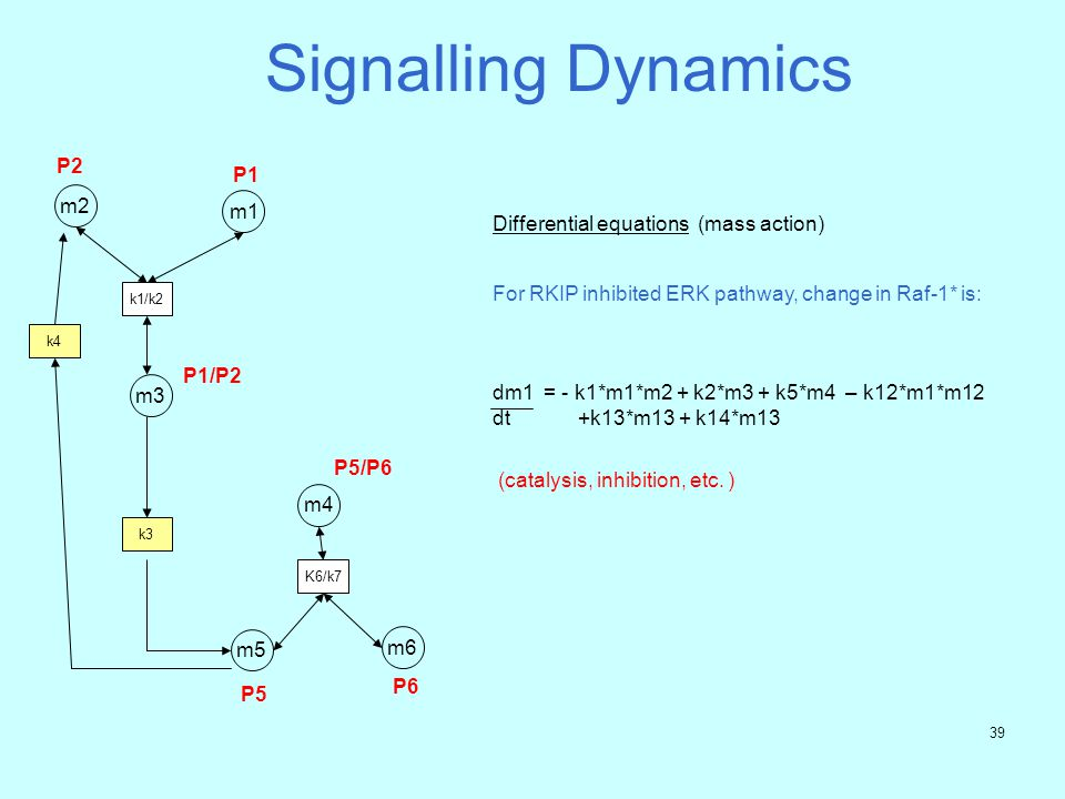 38 Signalling Dynamics m1 P1 m2 P2 k1/k2 m5 P5 K6/k7 m6 P6 m4 P5/P6 Activity matrix k1 k2k3 k4k5 k6 k7 P1 -1 +1 0 0 0 0 0 P2 -1 +1 0 +1 0 0 0 P1/P2 +1 -1 0 0 0 0 0 P5 0 0 +1 -1 0 -1 +1 P6 0 0 0 0 0 -1 +1 P5/P6 0 0 0 0 0 +1 -1 Differential equations (mass action) dm1 = - k1*m1*m2 + k2*m3 (nonlinear) dt k4 m3 k3 P1/P2