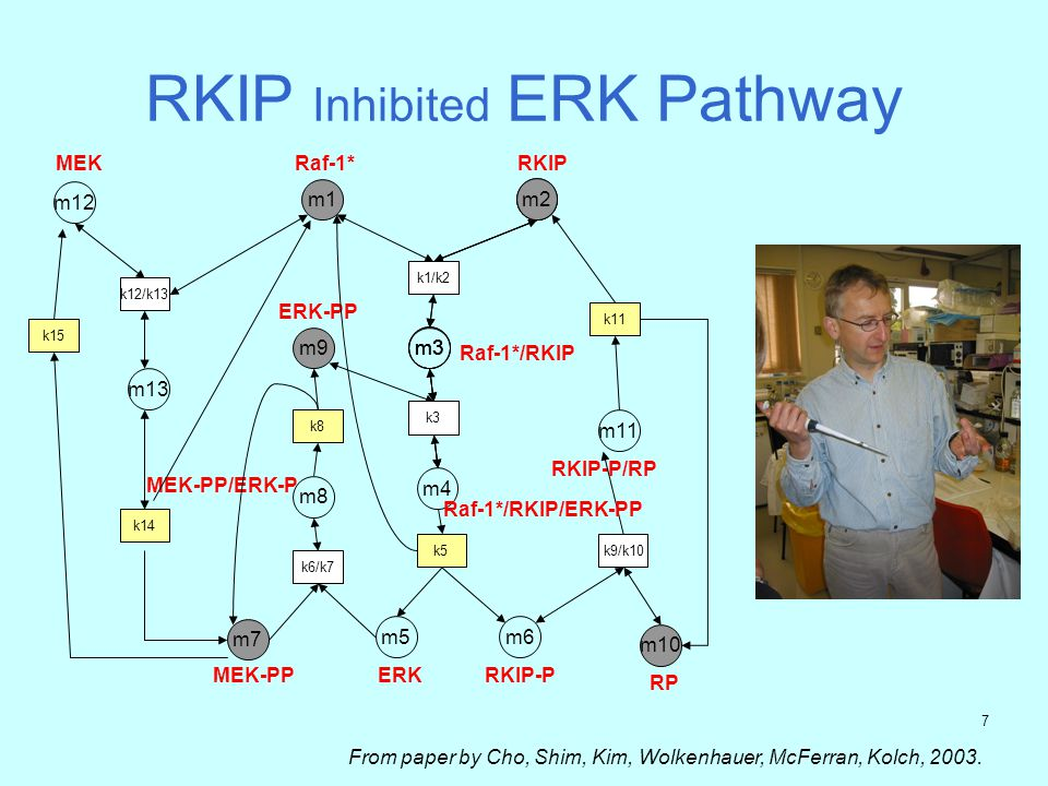 6 RKIP Inhibited ERK Pathway m1 Raf-1* m2 k1 m3 Raf-1*/RKIP m12 MEK K12/k13 m7 MEK-PP k6/k7 m5 ERK m8 MEK-PP/ERK-P k8 m9 ERK-PP k3 m4 k5 m6 RKIP-P m10 RP k9/k10 m11 RKIP-P/RP k11 m2 k1 m3 k3 Raf-1*/RKIP/ERK-PP m2 RKIP k1/k2 m3 k3 k15 m13 k14 From paper by Cho, Shim, Kim, Wolkenhauer, McFerran, Kolch, 2003.