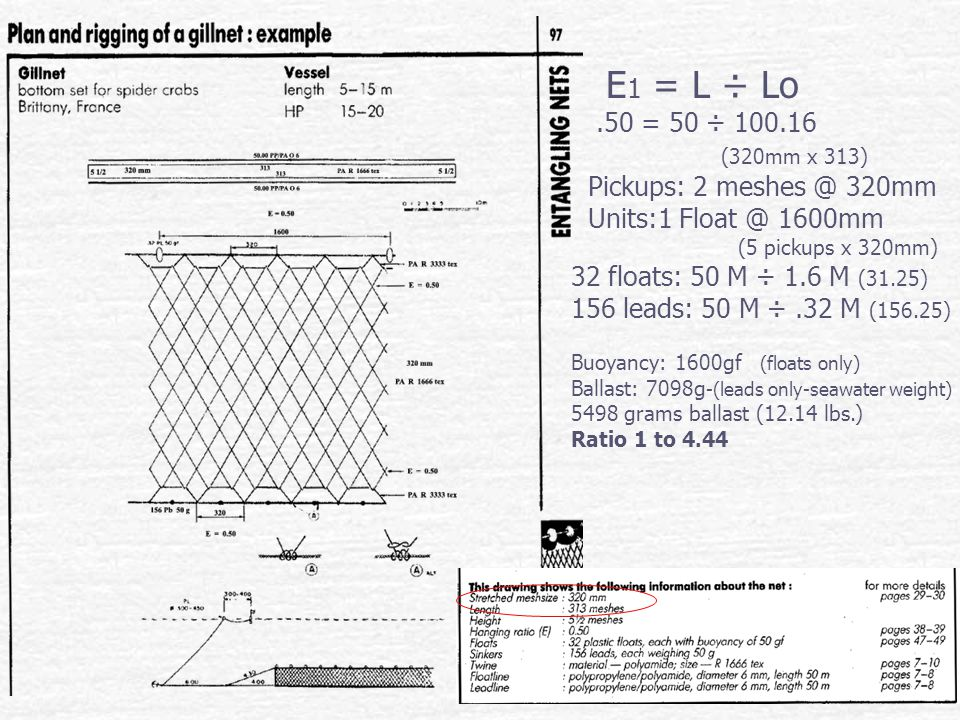 E 1 = L ÷ Lo.50 = 50 ÷ 100.16 (320mm x 313) Pickups: 2 meshes @ 320mm Units:1 Float @ 1600mm (5 pickups x 320mm) 32 floats: 50 M ÷ 1.6 M (31.25) 156 leads: 50 M ÷.32 M (156.25) Buoyancy: 1600gf (floats only) Ballast: 7098g -(leads only-seawater weight) 5498 grams ballast (12.14 lbs.) Ratio 1 to 4.44