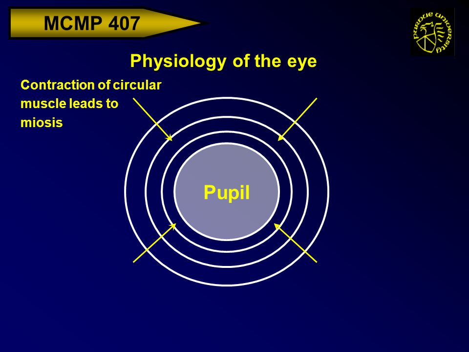 MCMP 407 Physiology of the eye Pupil Contraction of circular muscle leads to miosis