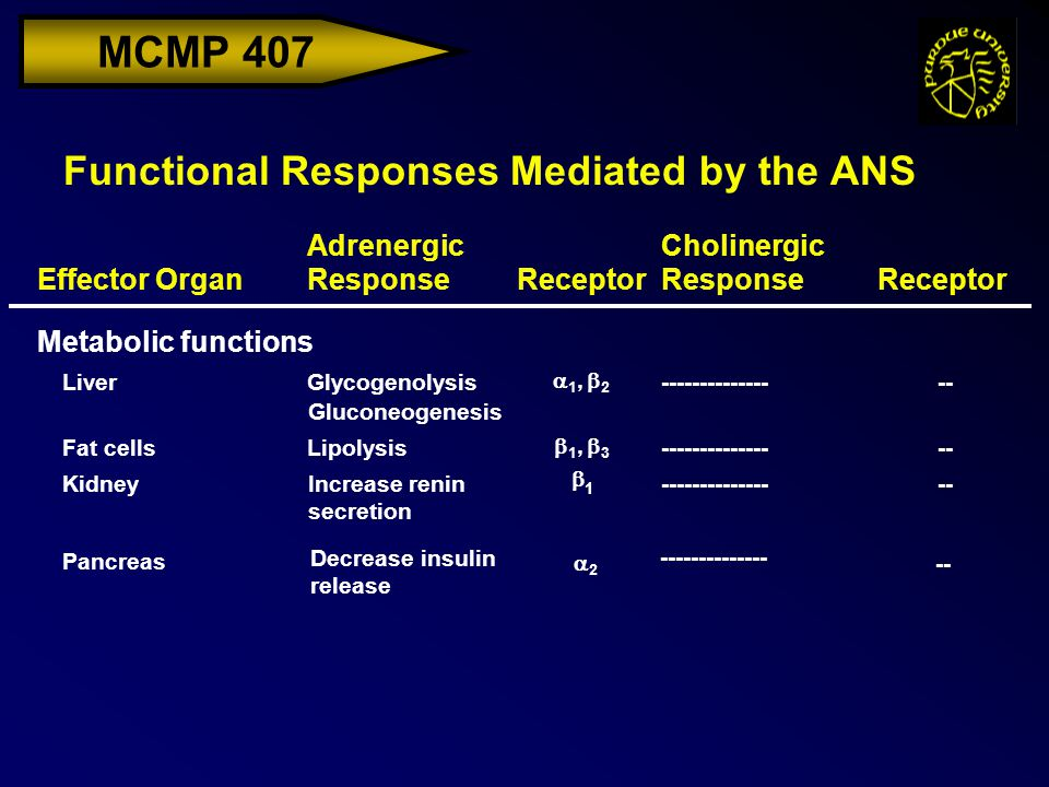 MCMP 407 Functional Responses Mediated by the ANS Effector Organ Adrenergic ResponseReceptor Cholinergic ResponseReceptor LiverGlycogenolysis---------