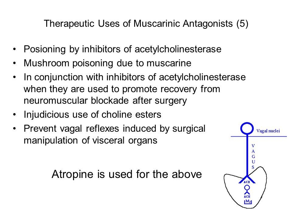 Therapeutic Uses of Muscarinic Antagonists (5) Posioning by inhibitors of acetylcholinesterase Mushroom poisoning due to muscarine In conjunction with
