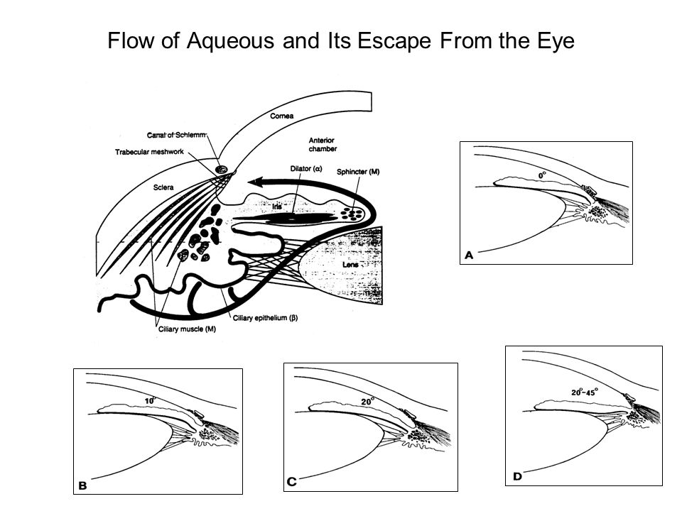 Flow of Aqueous and Its Escape From the Eye