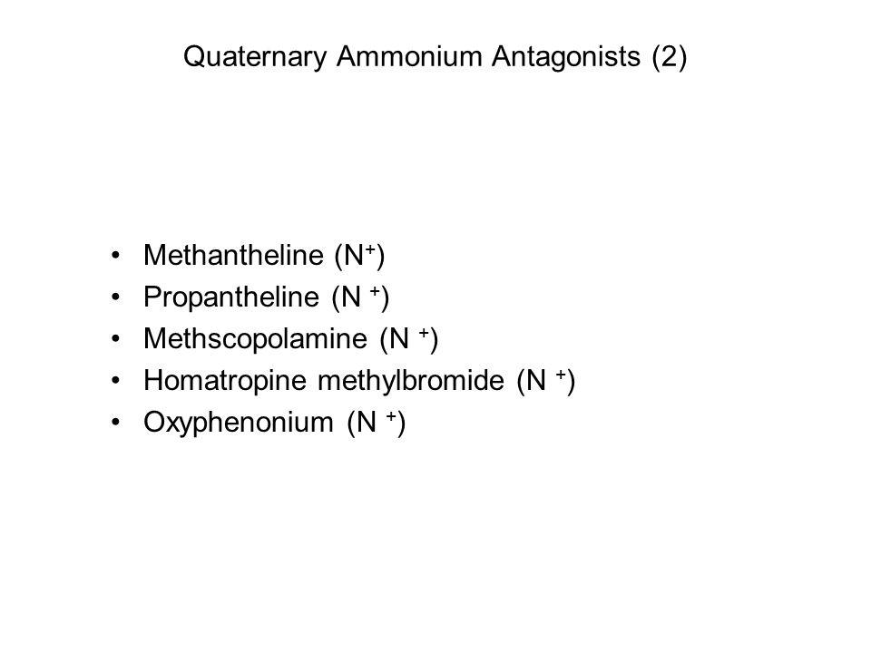 Quaternary Ammonium Antagonists (2) Methantheline (N + ) Propantheline (N + ) Methscopolamine (N + ) Homatropine methylbromide (N + ) Oxyphenonium (N + )