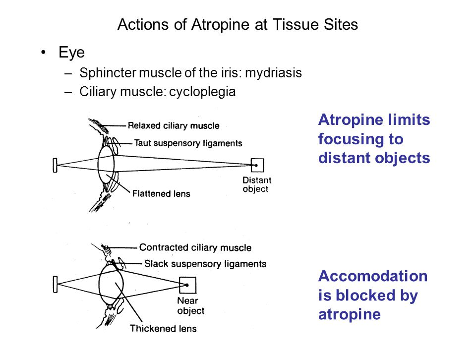 Actions of Atropine at Tissue Sites Eye –Sphincter muscle of the iris: mydriasis –Ciliary muscle: cycloplegia Atropine limits focusing to distant objects Accomodation is blocked by atropine