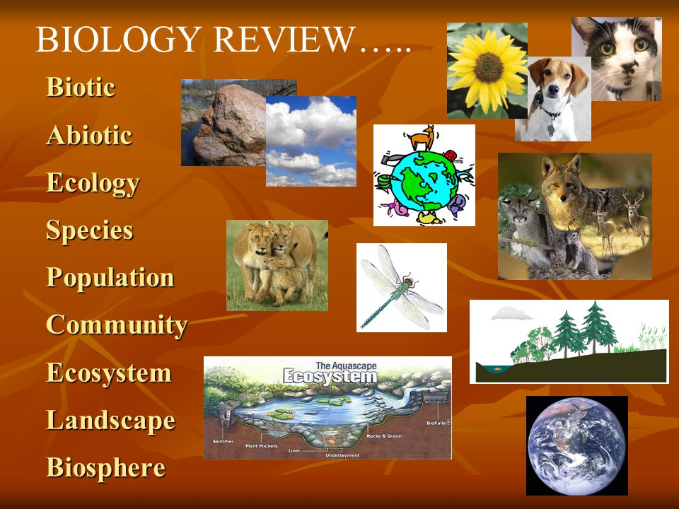 Biotic Abiotic Ecology Species Population Community Ecosystem Landscape Biosphere BIOLOGY REVIEW…..