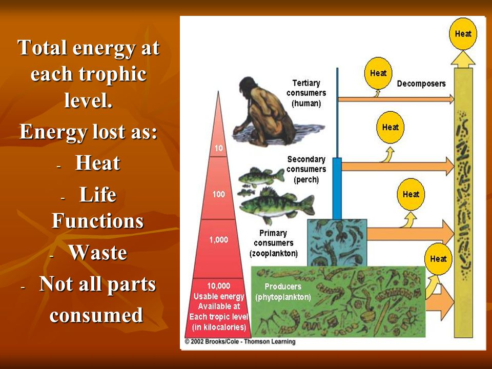 Total energy at each trophic level. Energy lost as: - Heat - Life Functions - Waste - Not all parts consumed consumed