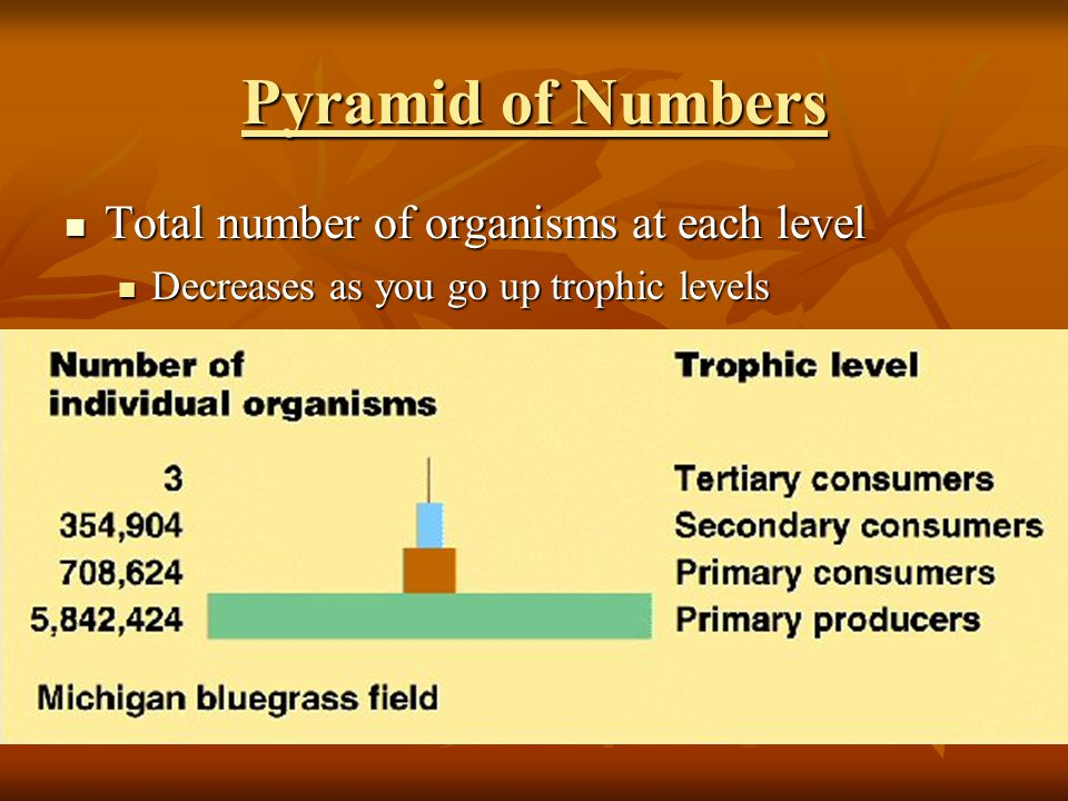 Pyramid of Numbers Total number of organisms at each level Total number of organisms at each level Decreases as you go up trophic levels Decreases as