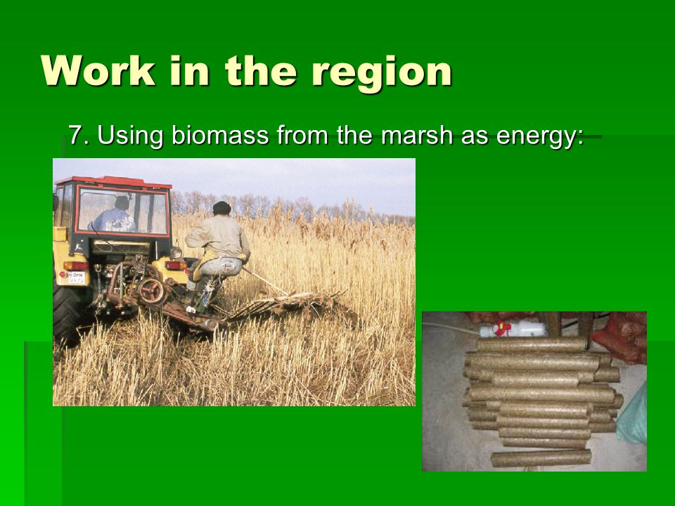 Work in the region 7. Using biomass from the marsh as energy :