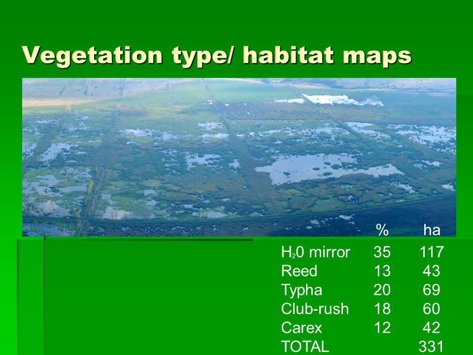 Vegetation type/ habitat maps %ha H 2 0 mirror35117 Reed1343 Typha2069 Club-rush1860 Carex1242 TOTAL331