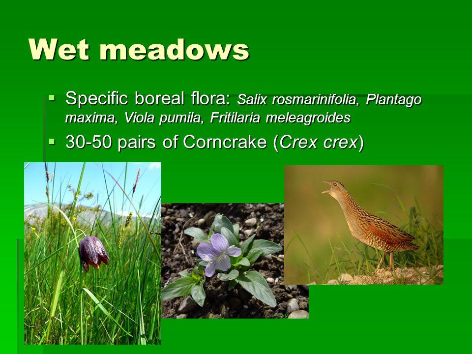 Wet meadows  Specific boreal flora: Salix rosmarinifolia, Plantago maxima, Viola pumila, Fritilaria meleagroides  30-50 pairs of Corncrake (Crex crex)