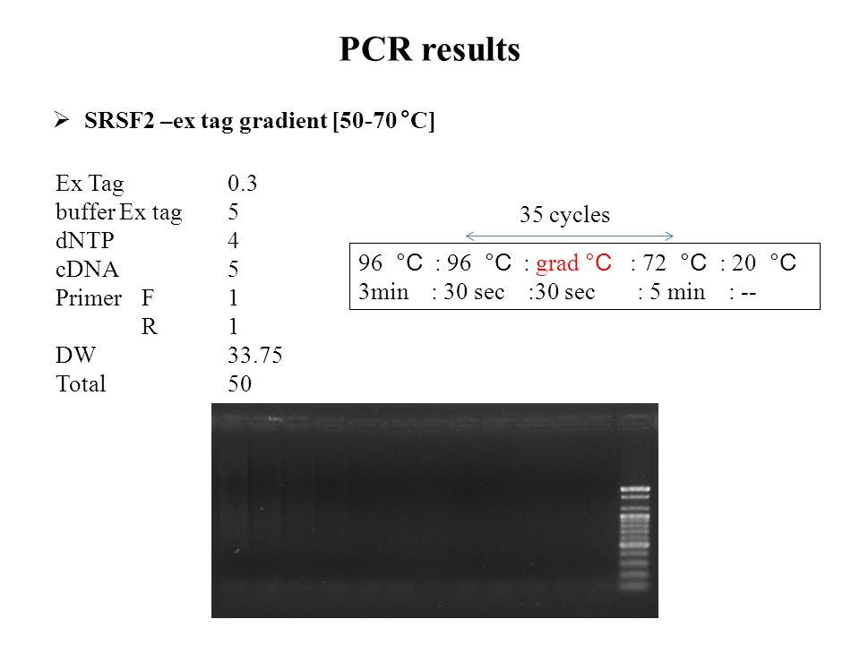 PCR results  SRSF2 –ex tag gradient [50-70 °C] Ex Tag 0.3 buffer Ex tag5 dNTP4 cDNA5 Primer F1 R1 DW33.75 Total 50 96 °C : 96 °C : grad °C : 72 °C :