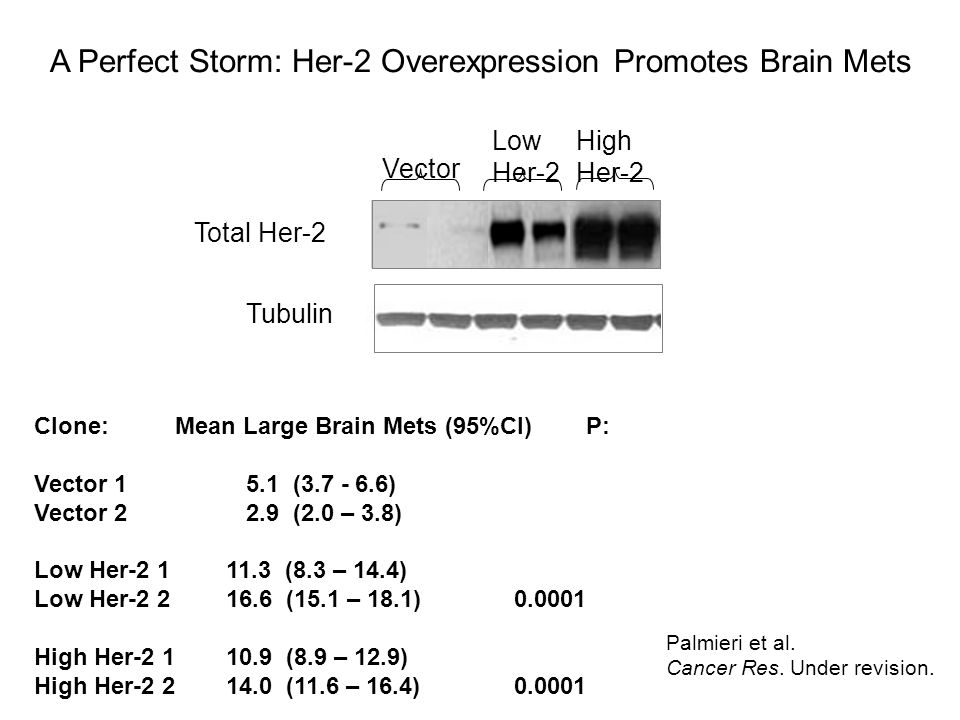 Tubulin Vector Low Her-2 High Her-2 Total Her-2 MDA-MB-231 Brain Seeking: Palmieri et al. Cancer Res. Under revision. Clone: Mean Large Brain Mets (95