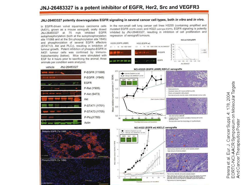 Perera et al. Eur. J. Cancer Suppl. 4: 178, 2004 EORTC-NCI-AACR Symposium on Molecular Targets And Cancer Therapeutics Poster
