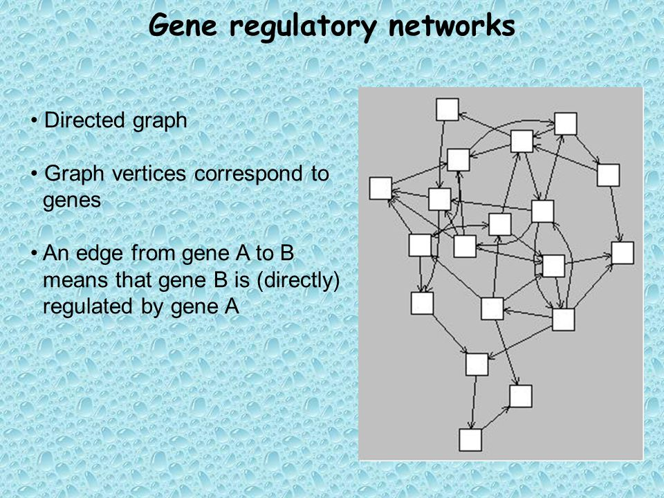 Gene regulatory networks Directed graph Graph vertices correspond to genes An edge from gene A to B means that gene B is (directly) regulated by gene A