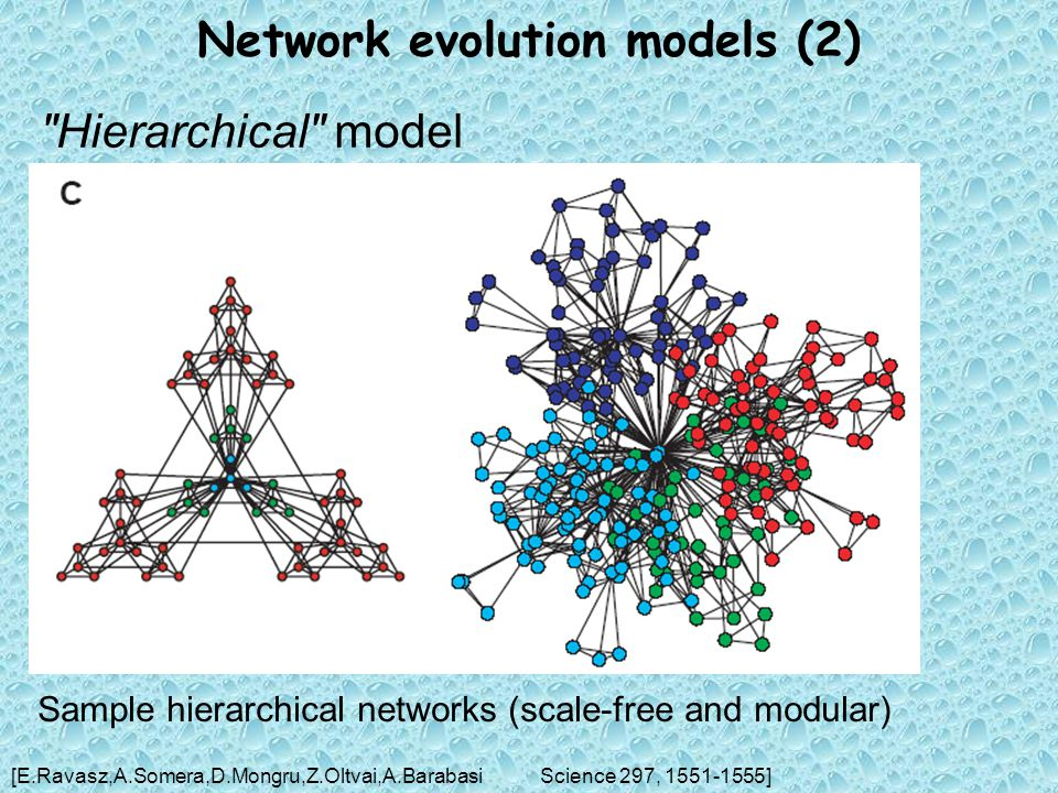 Network evolution models (2) Hierarchical model [E.Ravasz,A.Somera,D.Mongru,Z.Oltvai,A.BarabasiScience 297, 1551-1555] Sample hierarchical networks (scale-free and modular)