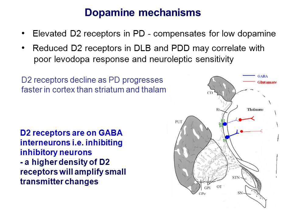D2 receptors are on GABA interneurons i.e.
