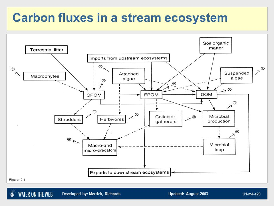 Developed by: Merrick, Richards Updated: August 2003 U1-m4-s20 Carbon fluxes in a stream ecosystem Figure 12.1