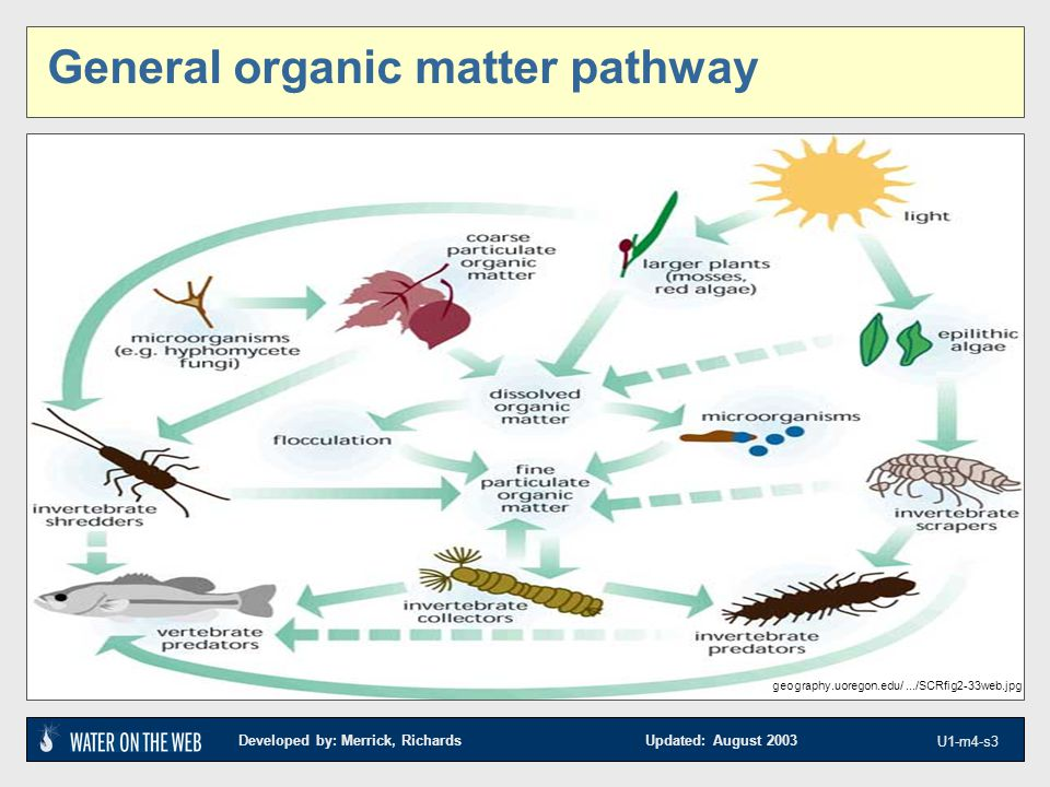 Developed by: Merrick, Richards Updated: August 2003 U1-m4-s3 geography.uoregon.edu/.../SCRfig2-33web.jpg General organic matter pathway
