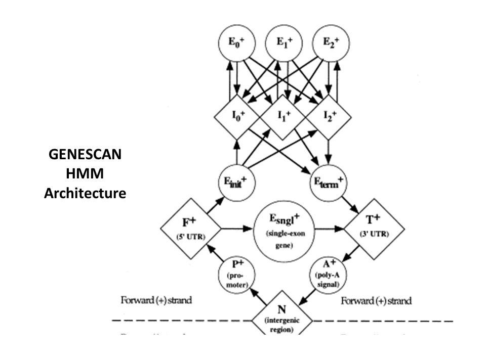 GENESCAN HMM Architecture