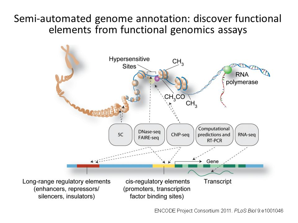 Semi-automated genome annotation: discover functional elements from functional genomics assays