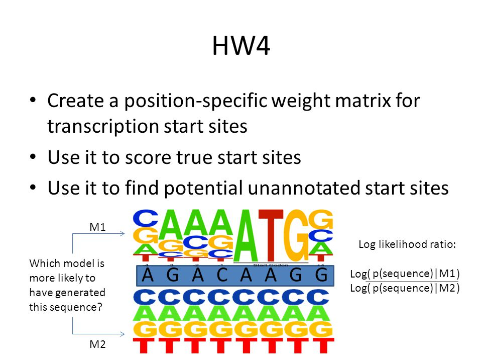 HW4 Create a position-specific weight matrix for transcription start sites Use it to score true start sites Use it to find potential unannotated start