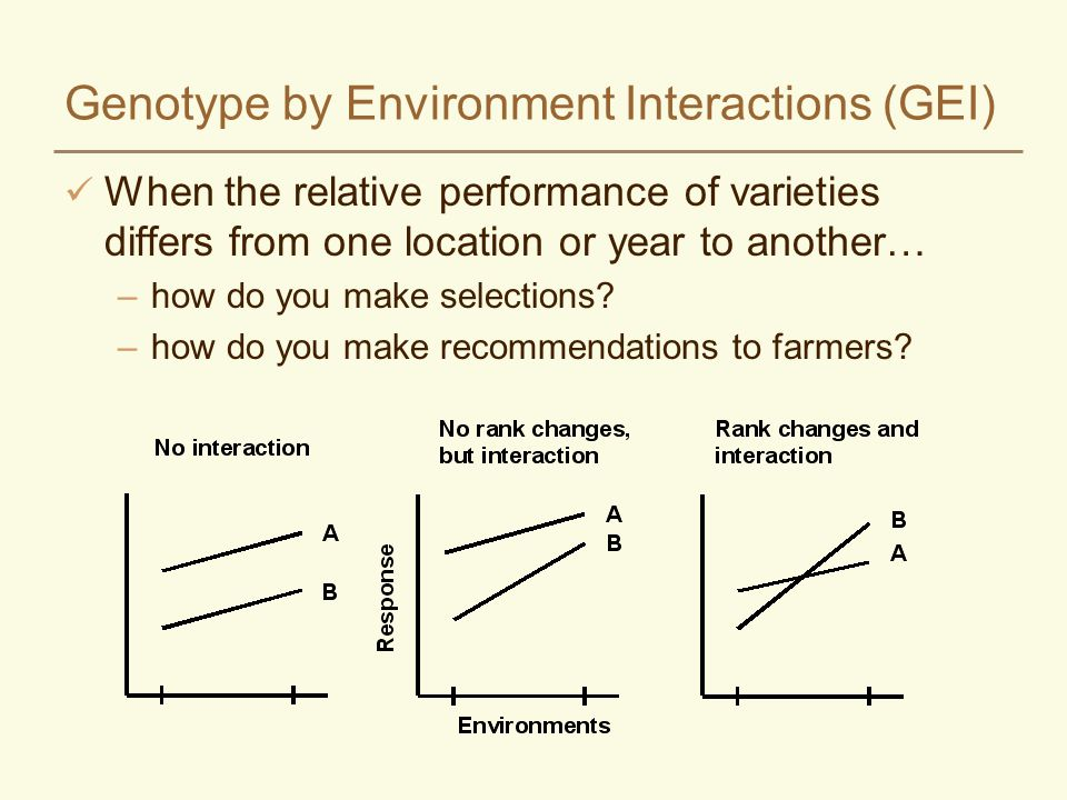 Genotype by Environment Interactions (GEI) When the relative performance of varieties differs from one location or year to another… –how do you make selections.