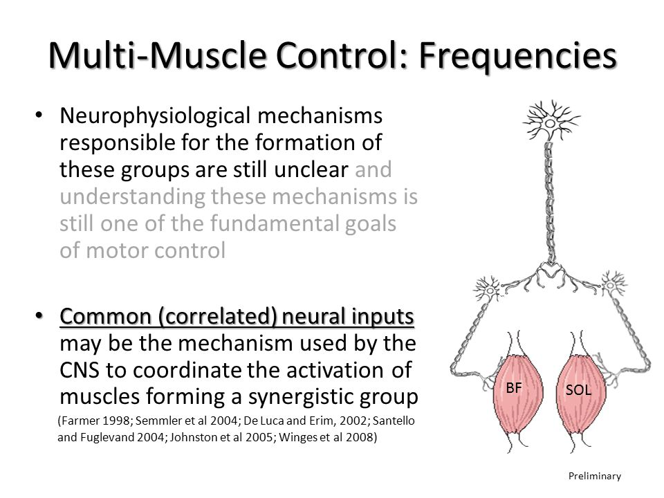 Multi-Muscle Control: Frequencies Neurophysiological mechanisms responsible for the formation of these groups are still unclear and understanding these mechanisms is still one of the fundamental goals of motor control Common (correlated) neural inputs Common (correlated) neural inputs may be the mechanism used by the CNS to coordinate the activation of muscles forming a synergistic group (Farmer 1998; Semmler et al 2004; De Luca and Erim, 2002; Santello and Fuglevand 2004; Johnston et al 2005; Winges et al 2008) SOL BF Preliminary