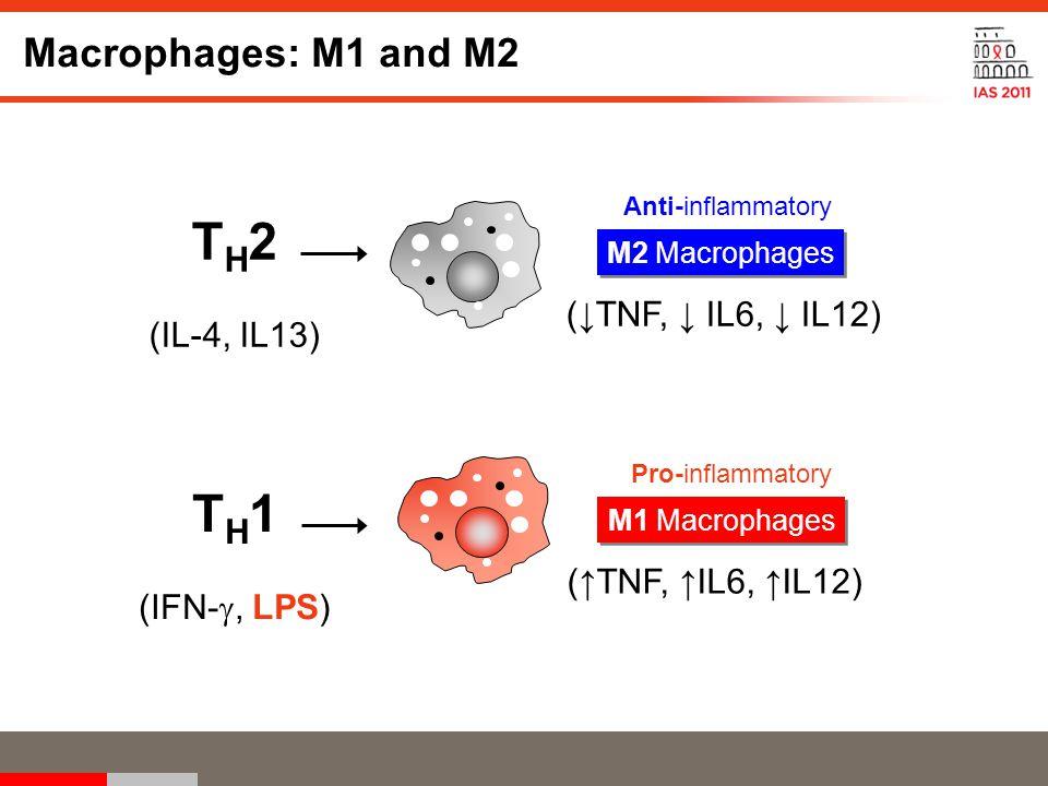 T H 2 (IL-4, IL13) Anti-inflammatory M2 Macrophages (↓TNF, ↓ IL6, ↓ IL12) T H 1 (IFN- , LPS) Pro-inflammatory M1 Macrophages (↑TNF, ↑IL6, ↑IL12) Macrophages: M1 and M2