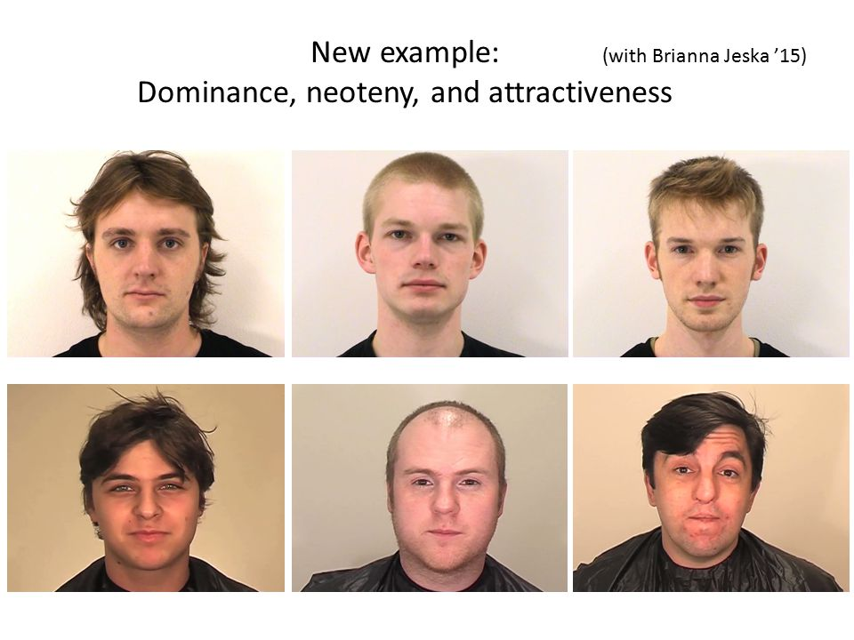 New example: Dominance, neoteny, and attractiveness (with Brianna Jeska '15)