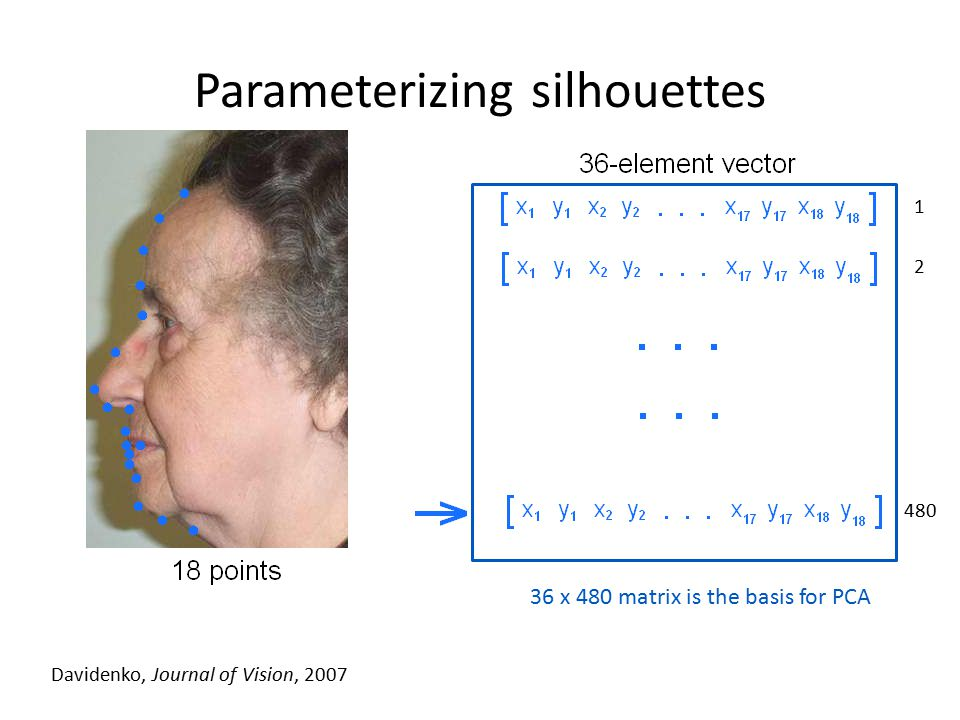 Parameterizing silhouettes Davidenko, Journal of Vision, 2007 1 2 480 36 x 480 matrix is the basis for PCA