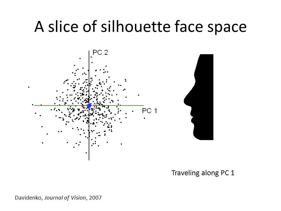 Traveling along PC 1 Davidenko, Journal of Vision, 2007 A slice of silhouette face space