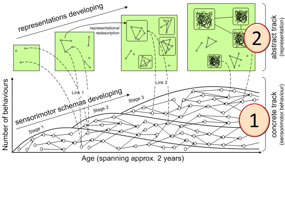 Timeline of Development Free Play: stereotypical accommodative relational Problem solving: support string stick radial grasp shapes in slots Birth 6 9 12 15 18 24 months simple relational functional relational Overlapping waves (Siegler) Really interesting part
