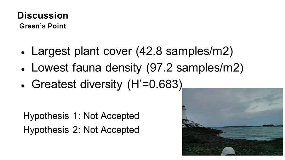 Discussion Green's Point ● Largest plant cover (42.8 samples/m2) ● Lowest fauna density (97.2 samples/m2) ● Greatest diversity (H'=0.683) Hypothesis 1