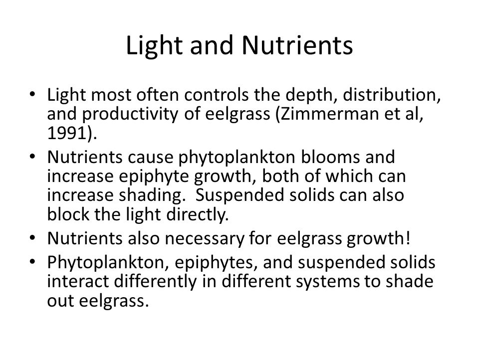 Light and Nutrients Light most often controls the depth, distribution, and productivity of eelgrass (Zimmerman et al, 1991). Nutrients cause phytoplan