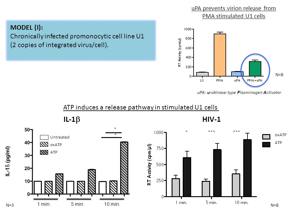 MODEL (I): Chronically infected promonocytic cell line U1 (2 copies of integrated virus/cell).