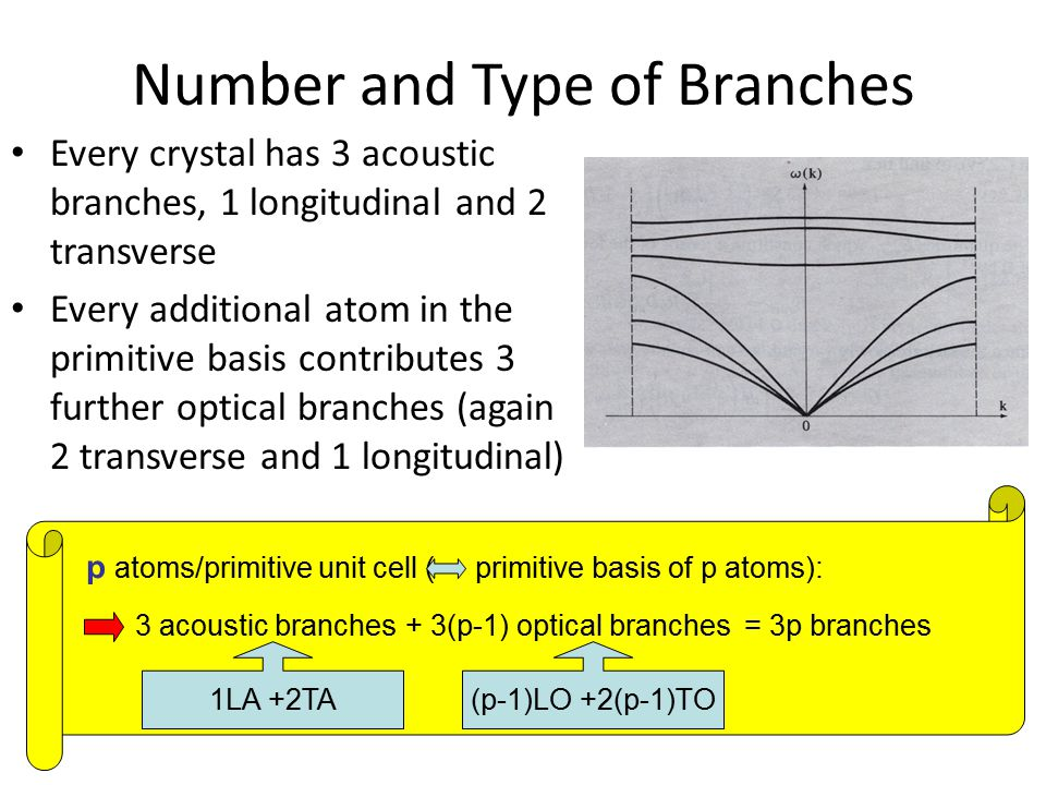Number and Type of Branches Every crystal has 3 acoustic branches, 1 longitudinal and 2 transverse Every additional atom in the primitive basis contri