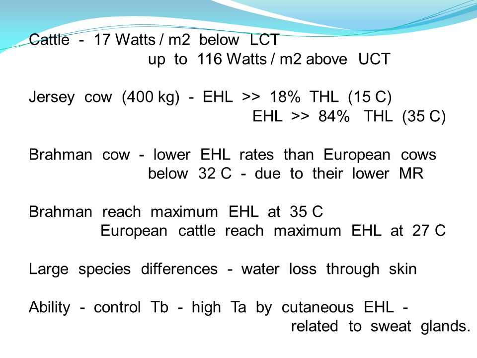 Cattle - 17 Watts / m2 below LCT up to 116 Watts / m2 above UCT Jersey cow (400 kg) - EHL >> 18% THL (15 C) EHL >> 84% THL (35 C) Brahman cow - lower