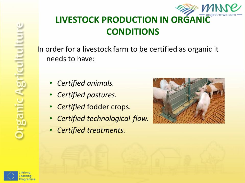 LIVESTOCK PRODUCTION IN ORGANIC CONDITIONS In order for a livestock farm to be certified as organic it needs to have: Certified animals.