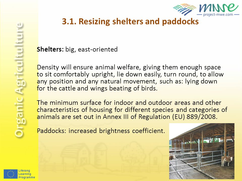 Shelters: big, east-oriented Density will ensure animal welfare, giving them enough space to sit comfortably upright, lie down easily, turn round, to allow any position and any natural movement, such as: lying down for the cattle and wings beating of birds.