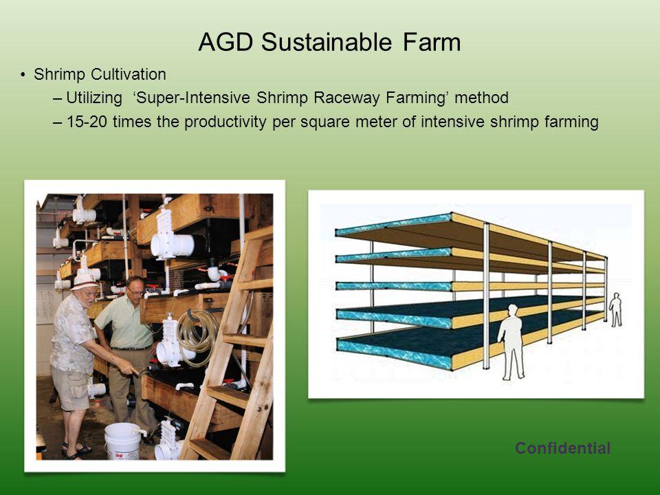 AGD Sustainable Farm Shrimp Cultivation –Utilizing 'Super-Intensive Shrimp Raceway Farming' method –15-20 times the productivity per square meter of intensive shrimp farming Confidential