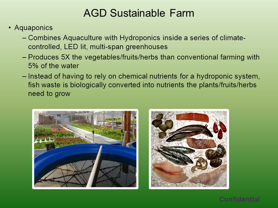 Aquaponics –Combines Aquaculture with Hydroponics inside a series of climate- controlled, LED lit, multi-span greenhouses –Produces 5X the vegetables/fruits/herbs than conventional farming with 5% of the water –Instead of having to rely on chemical nutrients for a hydroponic system, fish waste is biologically converted into nutrients the plants/fruits/herbs need to grow AGD Sustainable Farm Confidential