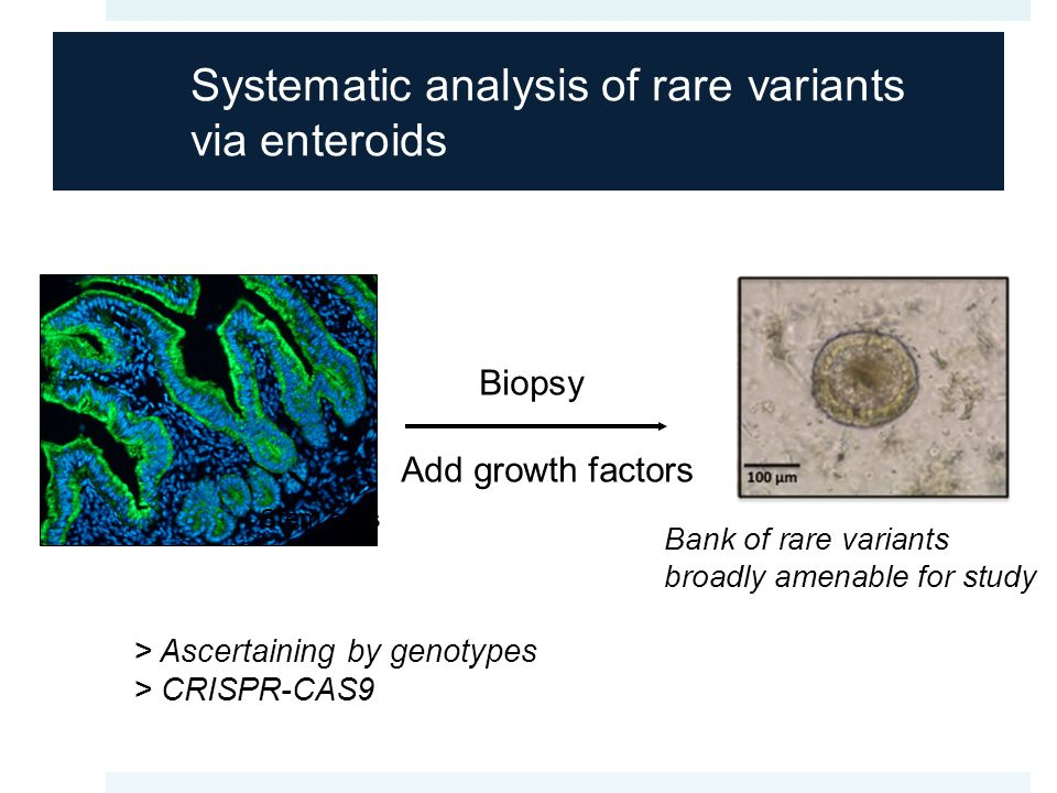 Systematic analysis of rare variants via enteroids Bank of rare variants broadly amenable for study Stem cells Biopsy Add growth factors Stem cells > Ascertaining by genotypes > CRISPR-CAS9