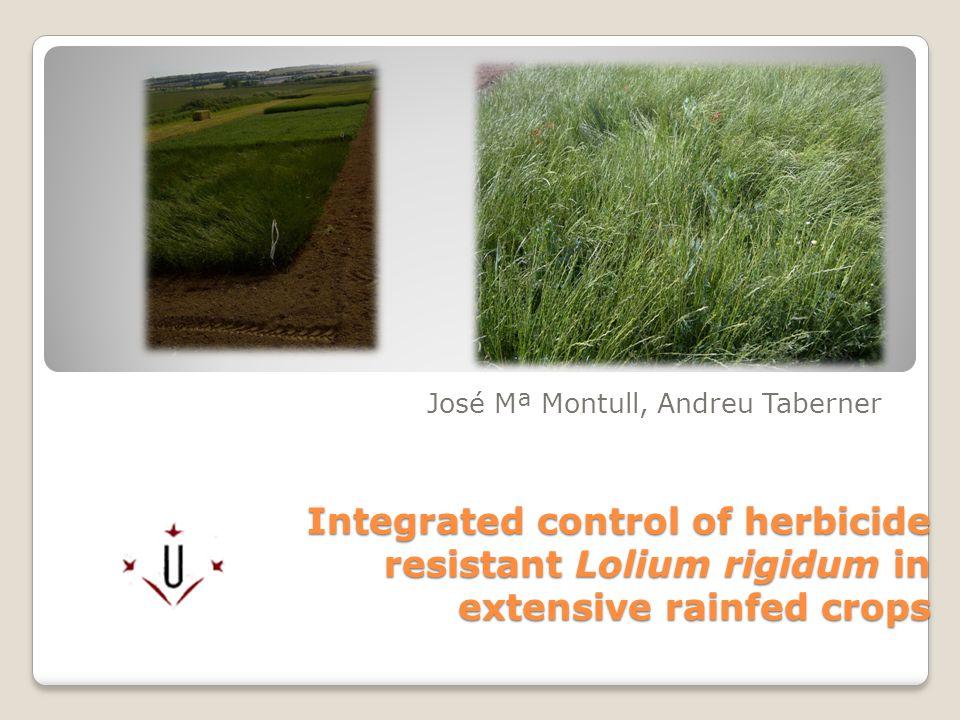 Integrated control of herbicide resistant Lolium rigidum in extensive rainfed crops José Mª Montull, Andreu Taberner