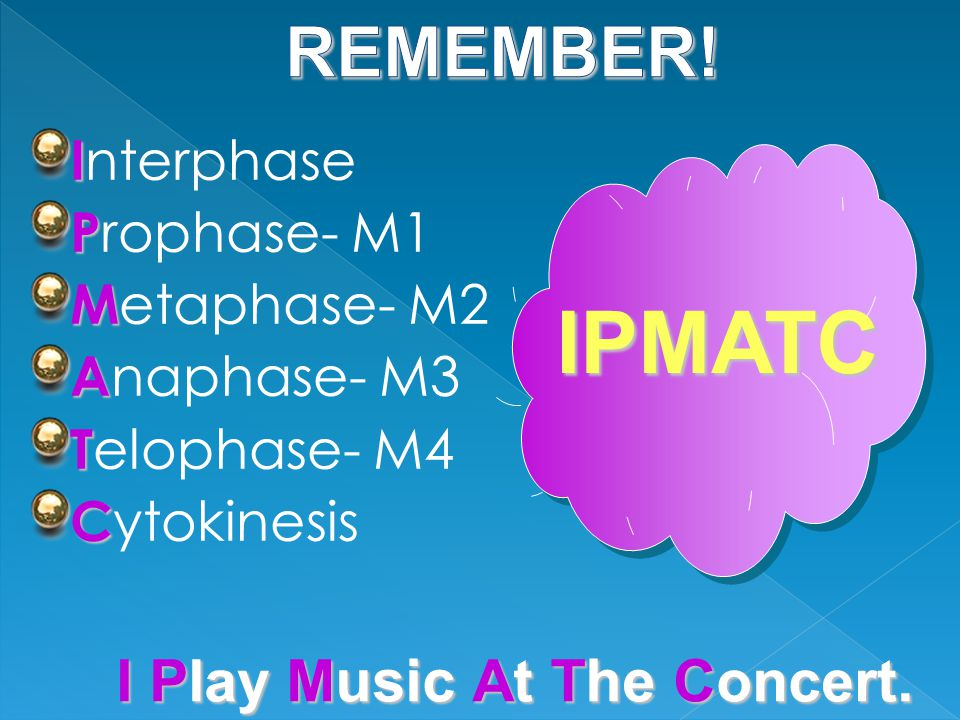 I I nterphase P P rophase- M1 M M etaphase- M2 A A naphase- M3 T T elophase- M4 C C ytokinesis IPMATC I Play M usic At T he Concert.