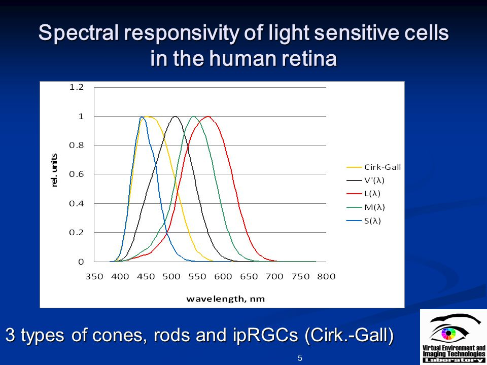 Spectral responsivity of light sensitive cells in the human retina 5 3 types of cones, rods and ipRGCs (Cirk.-Gall)