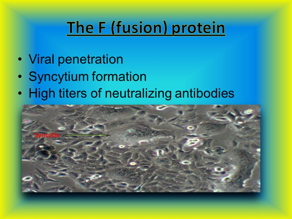 Viral penetration Syncytium formation High titers of neutralizing antibodies Syncytia